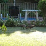 Early morning garden guests and pool beyond