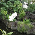 Gardens at The Sanur