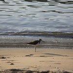 Stunning birds along the beach.