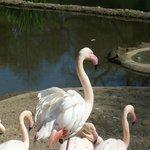flamingos looking beautiful