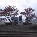 熱海桜もあります