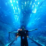 welcome to Dubai Aquarium :-)