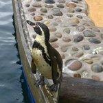 Penguin (Judy I think!)