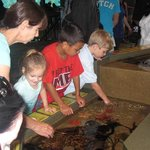 Sting ray exhibition