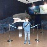 El tiburón a escala