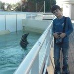 Foca del museo del mar