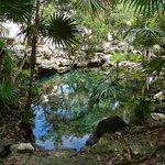 """The local """"Cenote"""", a 3-min walk from Casa Marbella."""