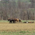 mule drawn plows