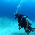Clarence diving/ Ocean Explorers