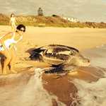 Rare sighting of a leatherback!