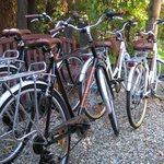 Complimentary Bicycles (95897748)