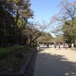 上野恩賜公園の様子