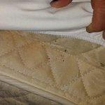 Possible bed bug infestation
