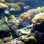 Large salt water tank & tropical fish at the National Aquarium