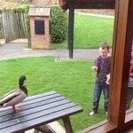 ducks breakfast at No 16