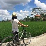 Rice Paddy Field nearby Kelabang Moding
