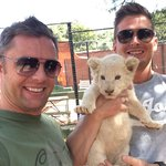 Lion cubs can be the cutest things....