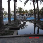 Palm gardens and pool area