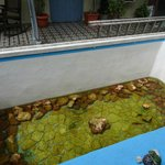Vue de la chambre sur l'aquarium