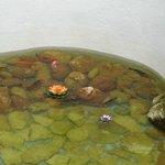Aquarium dans le patio
