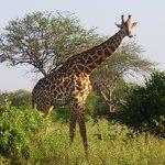 WT & Safaris Ltd - Day Tours Foto