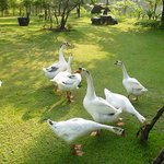 The hotel Geese