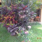Une des couleurs du jardin