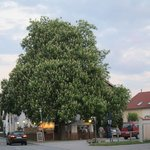 tree outside restaurant