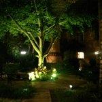 courtyard tree at night
