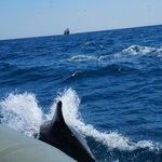 Delfiner nära båten