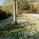 Il Giardino - The Garden