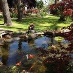Koi pond in peaceful setting
