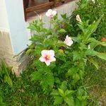 flower garden of the bungalow
