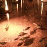 Рыбы и монеты