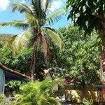 vue sur les bungalows dans le jardin