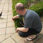 Jardins sempre cheios de pássaros, muito mansos