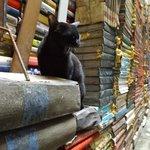 gatto tra i libri