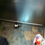 Broken Beer Bottle in the elevator