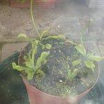 orto botanico pianta carnivora