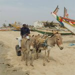 Donkey cart ride to the beach