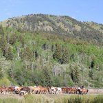 Horses leaving the corral