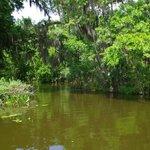 Dora Canal Bayou