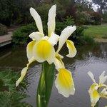 Don't miss beautiful flora