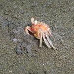 Un des nombreux crabes de la plage :)