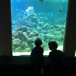 My boys love the indoor fish, seahorses, octopus, etc