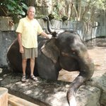 Elephant Bathing Time!!