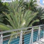 plantas y árboles que abundan en en hotel