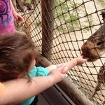 feeding the giraffes is loads of fun !