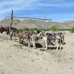 You can ride a donkey, ride in a truck, or walk to Boquillas