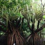 external roots
